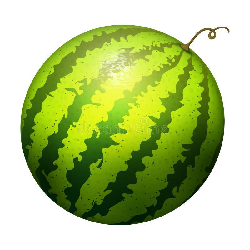 De rijpe gestreepte natuurlijke groene geïsoleerde rijpe meloen van de watermeloen realistische sappige vectorillustratie royalty-vrije illustratie