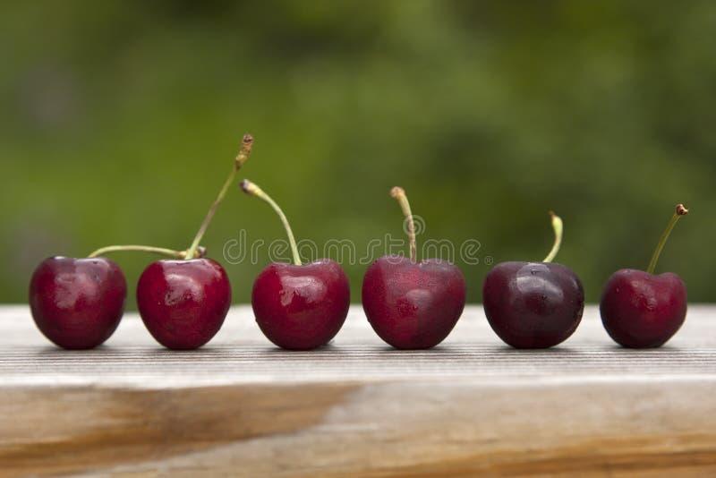 De rijpe rode kersen met stammen stelden op een rij na oogst op stock afbeeldingen