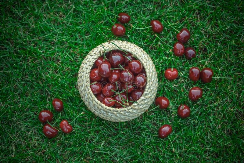 De rijpe rode zoete kers wordt verzameld in de mand, zijn de bessen verspreid op het gras stock foto's