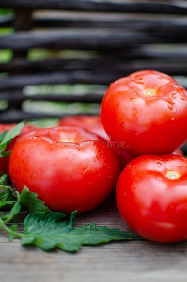 De rijpe tomaten zijn in een rieten mand royalty-vrije stock fotografie