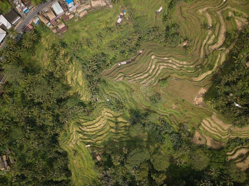 De rijst Bali, Indonesië van het satellietbeeldgebied royalty-vrije stock foto
