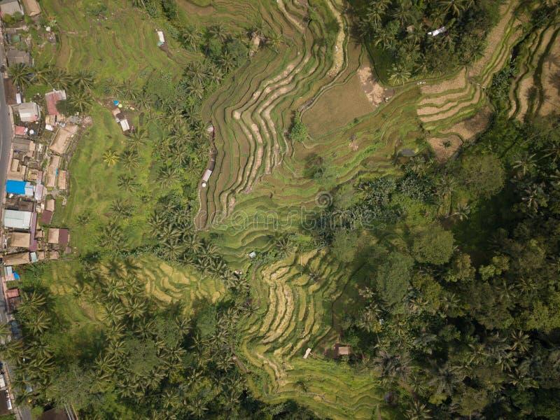De rijst Bali, Indonesië van het satellietbeeldgebied stock afbeelding