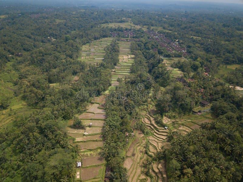De rijst Bali, Indonesië van het satellietbeeldgebied royalty-vrije stock afbeelding