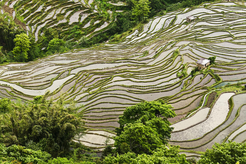 De rijst-padie van Yunnan terrasvormige aanleg stock fotografie