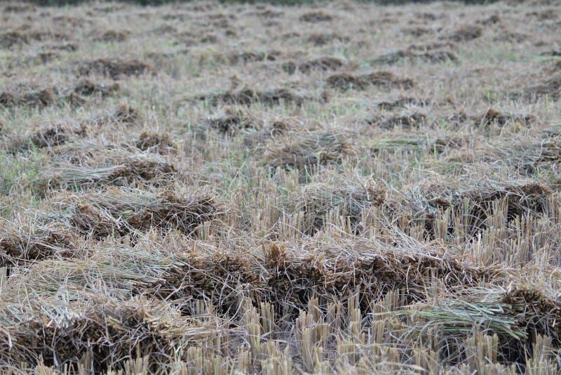 De rijstkorrels verzamelden één Plaats na Knipsel royalty-vrije stock foto's