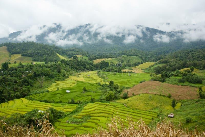 De rijstterras van Nice royalty-vrije stock afbeelding