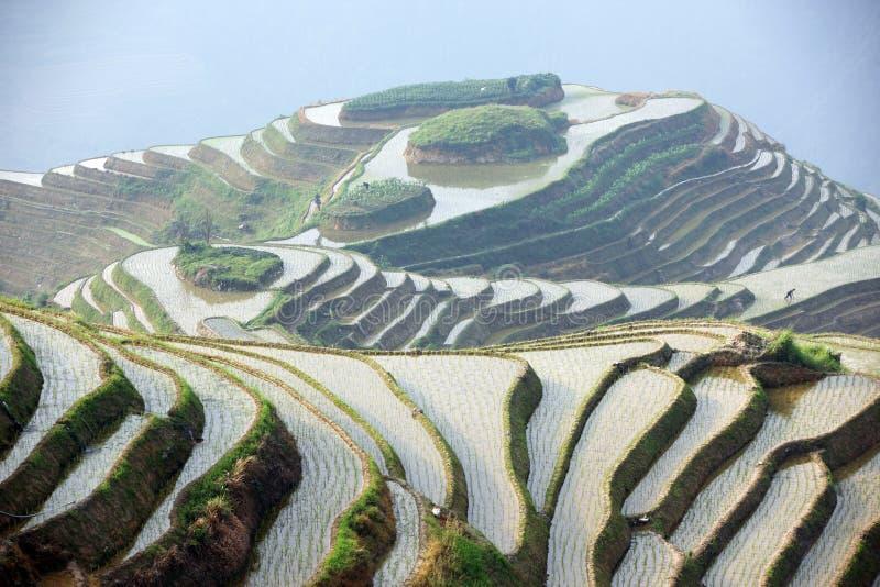 De rijstterrassen van Longji stock afbeeldingen