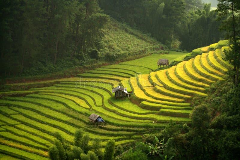 De rijstterrassen zijn omringd stock afbeeldingen