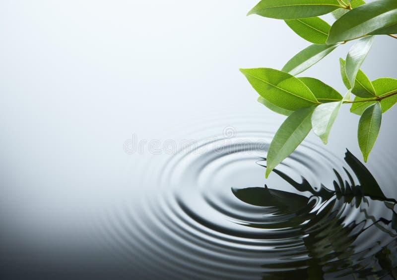 De rimpeling en het blad van het water stock foto's
