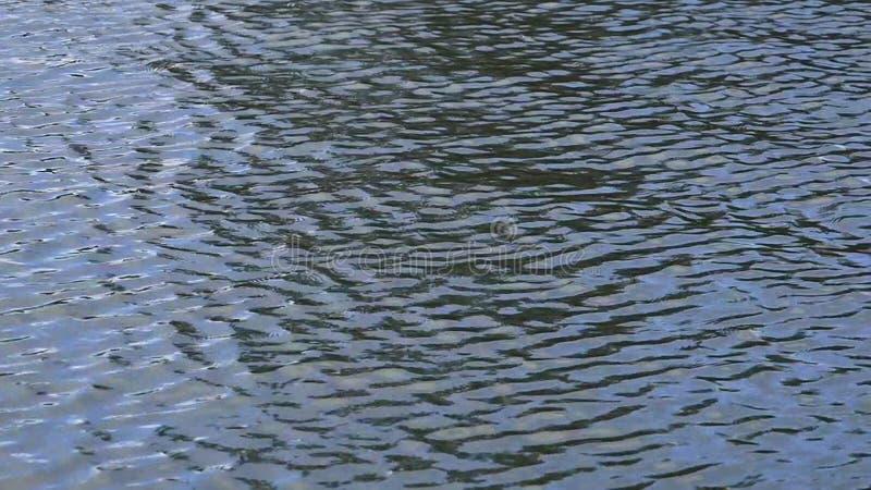 vijver water