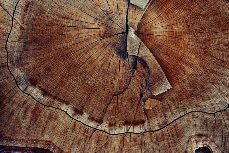 De ring van de houtsnedetextuur stock afbeeldingen