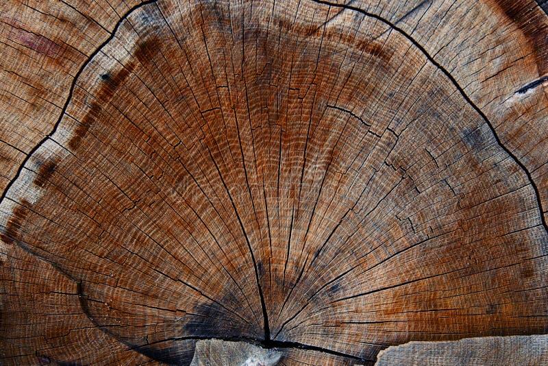 De ring van de houtsnedetextuur stock fotografie