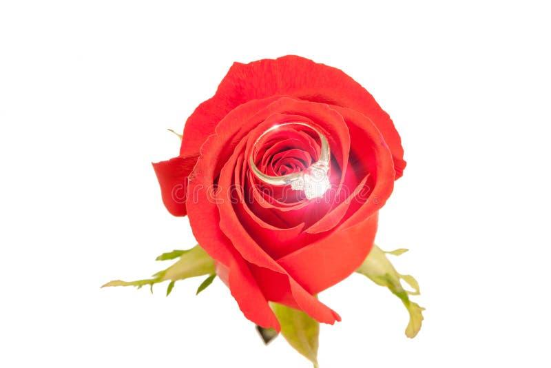 De ring van de huwelijksdiamant vonken geplaatst op bloesem mooie rode ro royalty-vrije stock afbeelding