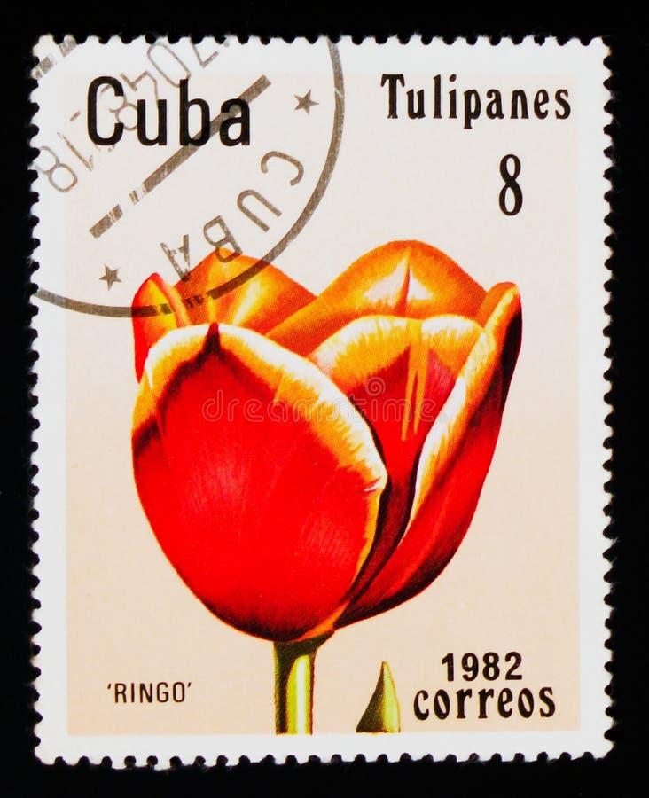 ` De Ringo do ` da tulipa, serie das tulipas, cerca de 1982 imagem de stock royalty free
