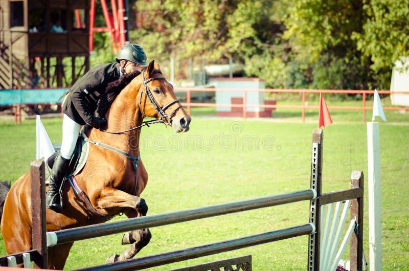De rit mooi bruin paard en sprong van de jonge mensenjockey over de bifurcatie in ruitersportclose-up stock foto