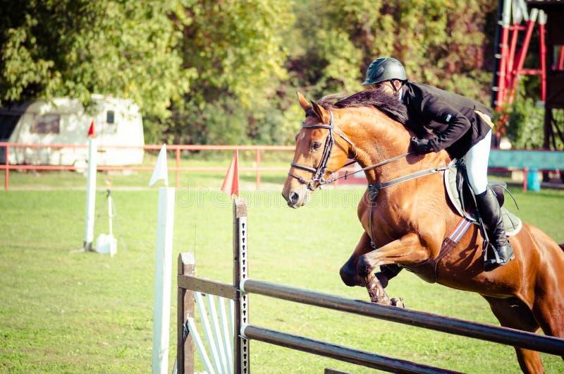 De rit mooi bruin paard en sprong van de jonge mensenjockey over de bifurcatie in ruitersportclose-up Oktober - 05 2017 Novi Sad, stock afbeelding