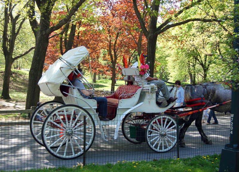 De rit van het paard en van het vervoer stock foto