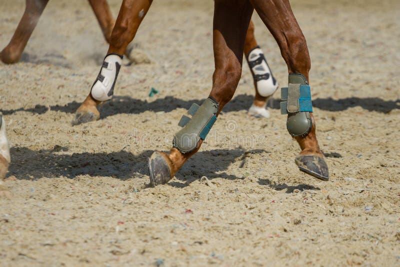 De ritten van het dressuurpaard in de arena royalty-vrije stock afbeeldingen