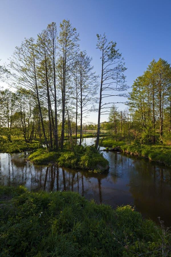 In de rivier royalty-vrije stock fotografie
