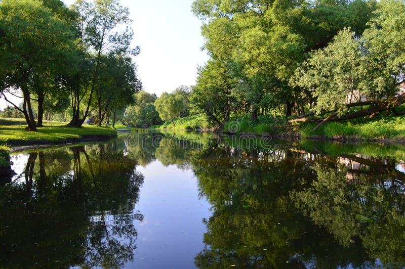 De rivier in een bos stock foto's