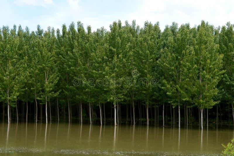de rivier groeide na zware regens royalty-vrije stock foto's