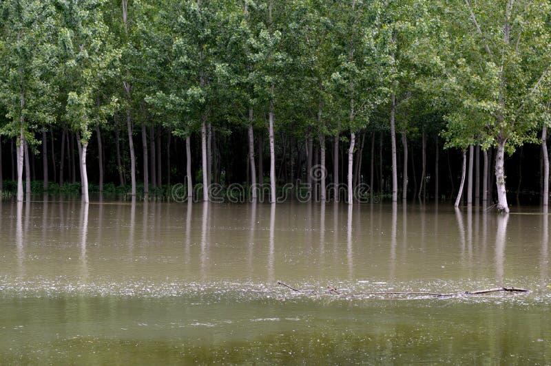 De rivier groeide na zware regens royalty-vrije stock foto