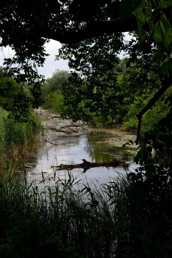 De rivier groeide na zware regens stock fotografie