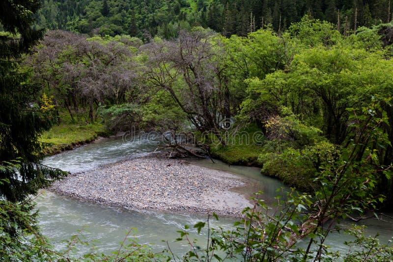 De rivier in het de oud-groeibos stock foto