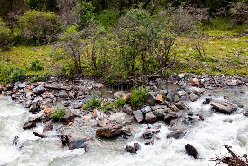De rivier in het de oud-groeibos stock fotografie
