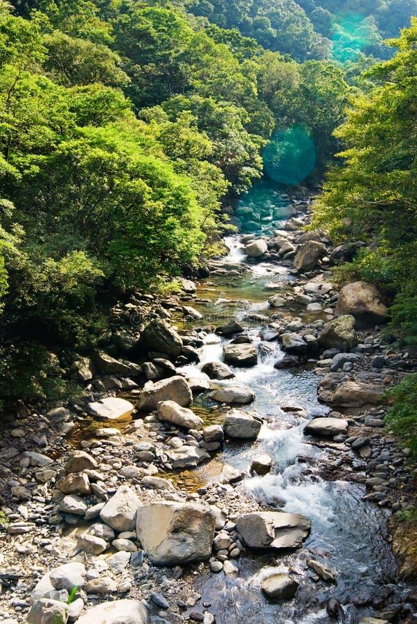 De rivier komt uit bos stock fotografie