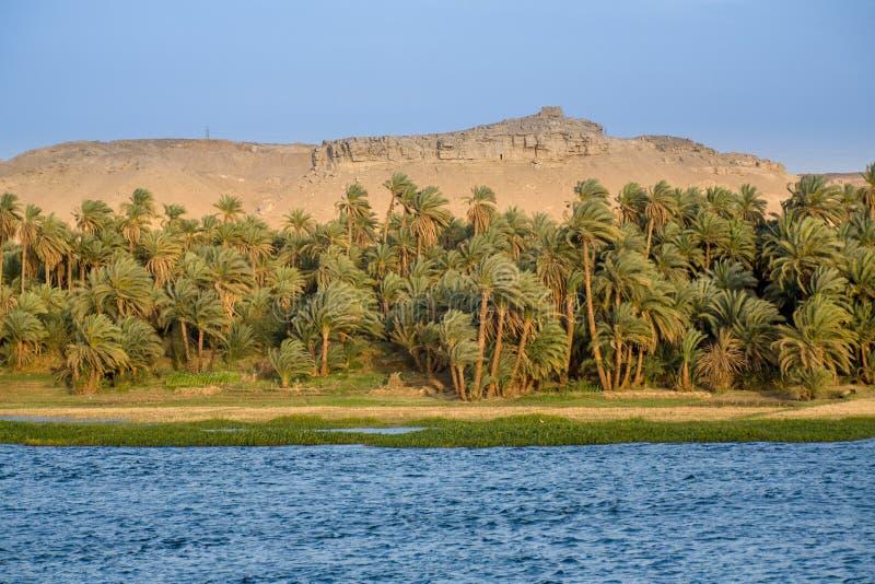 De rivier Nijl, Palmen, en Woestijn royalty-vrije stock afbeelding