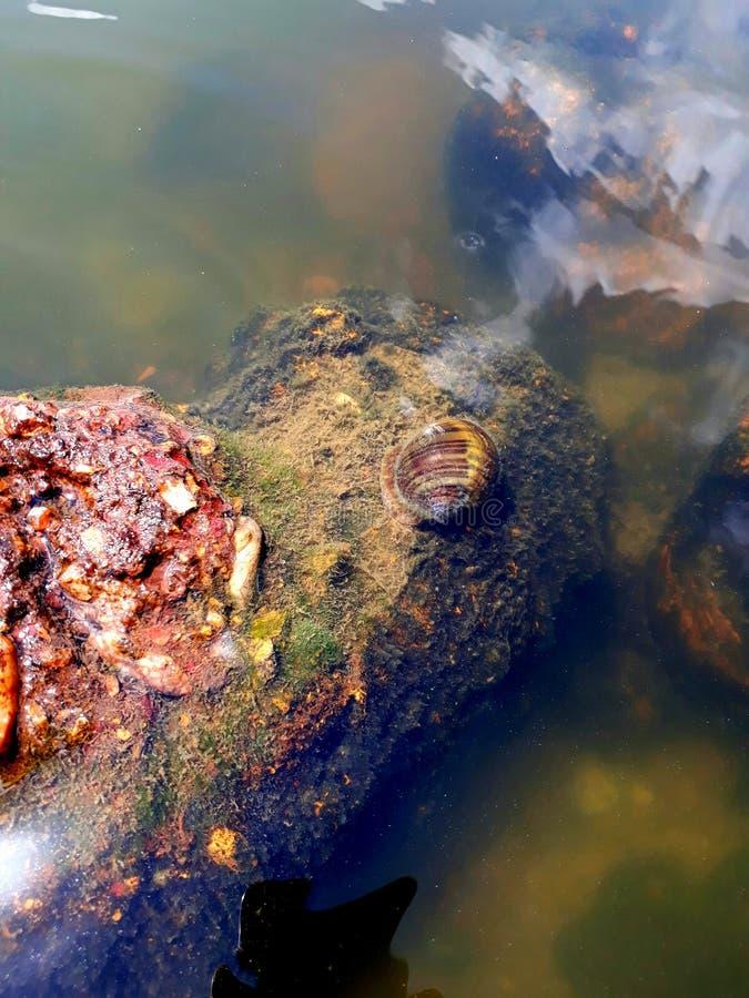 de rivier in de stad van teresinapiaui in Brazilië royalty-vrije stock afbeeldingen