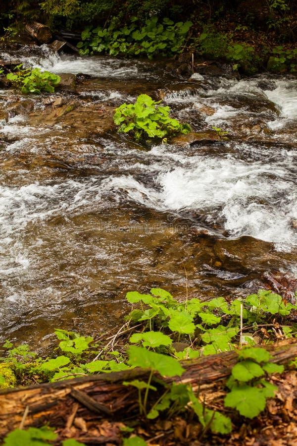 De rivier stroomt stroomafwaarts stock foto's