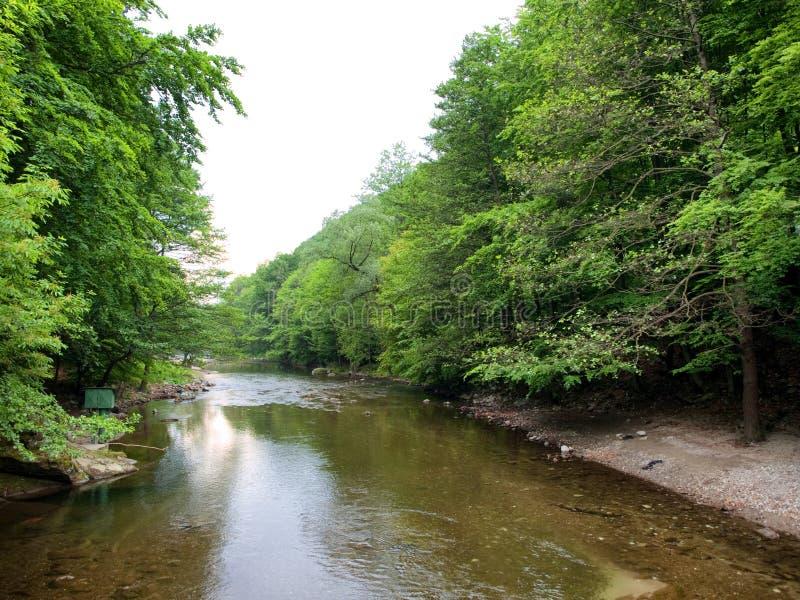 De rivier van Cerna stock afbeelding