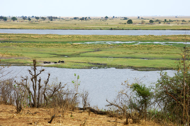 De rivier van Chobe, grens van Botswana en Namibië royalty-vrije stock foto's
