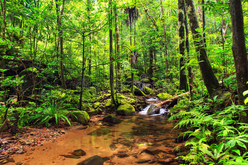 De rivier van de Masoalawildernis royalty-vrije stock foto