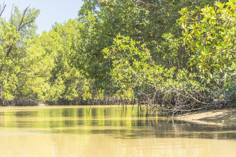 De rivier van Gambia royalty-vrije stock fotografie