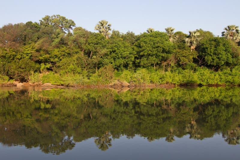 De rivier van Gambia in Niokolo Koba stock fotografie