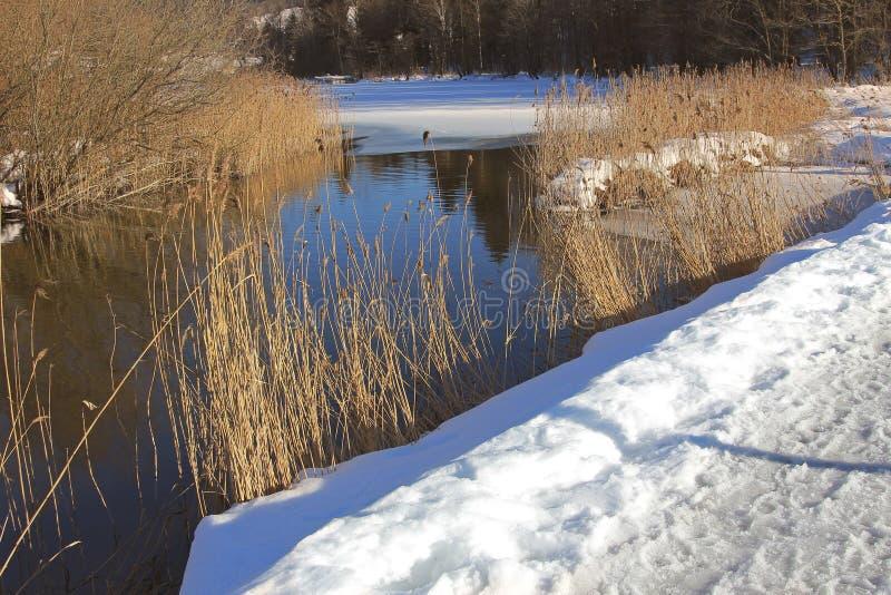 De rivier van het de winterlandschap schlierach met droge riet en sneeuwdekking stock afbeeldingen