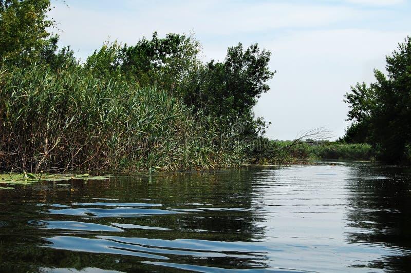 De rivier van het de zomeralluviale gebied met wildernissen van riet en bomen royalty-vrije stock afbeeldingen