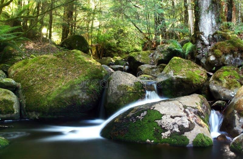 De Rivier van het regenwoud stock afbeeldingen