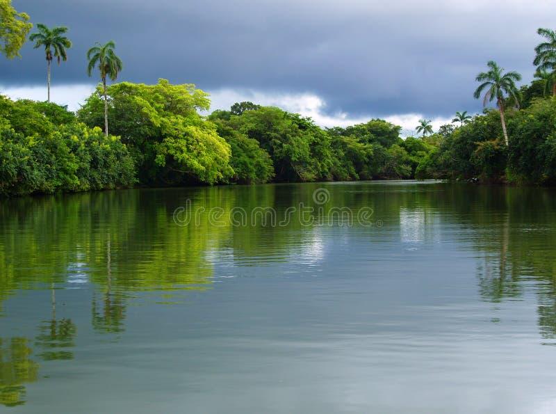 De rivier van het regenwoud royalty-vrije stock afbeeldingen