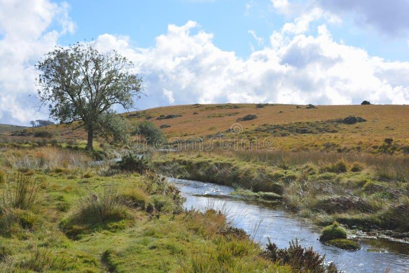 De Rivier van het het westenpijltje dichtbij Twee Bruggen, het Nationale Park van Dartmoor, Devon, Engeland royalty-vrije stock fotografie