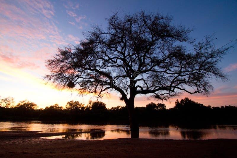 De Rivier van Limpopo royalty-vrije stock fotografie