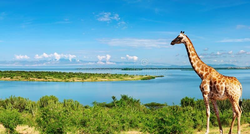 De rivier van Nijl, Oeganda stock fotografie