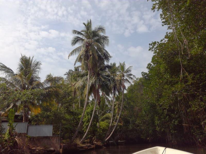 De Rivier van Sri Lanka Bentota stock afbeeldingen