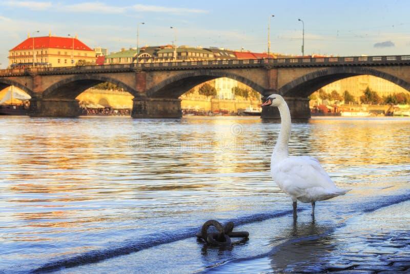 De rivier van Vltava Praag, Tsjechische Republiek stock afbeeldingen