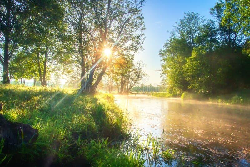 De rivieraard van de de zomerochtend Heldere zon op rivieroever Groene bomen in zonlicht op rivierkust Toneelaardlandschap in zon royalty-vrije stock fotografie