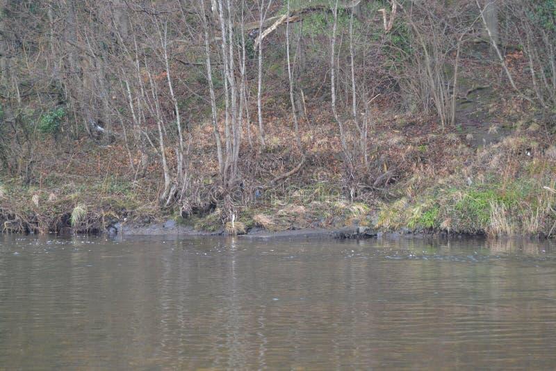 De rivierbank stock afbeelding