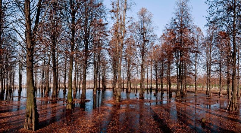De rivierbos van de winter royalty-vrije stock fotografie